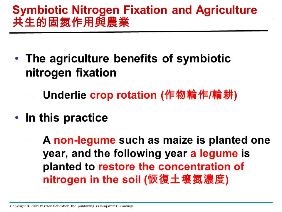 Effects of Nitrogen on Pea Plants