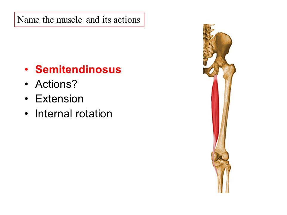 Berühmt Semitendinosus Schmerz Bilder - Menschliche Anatomie Bilder ...