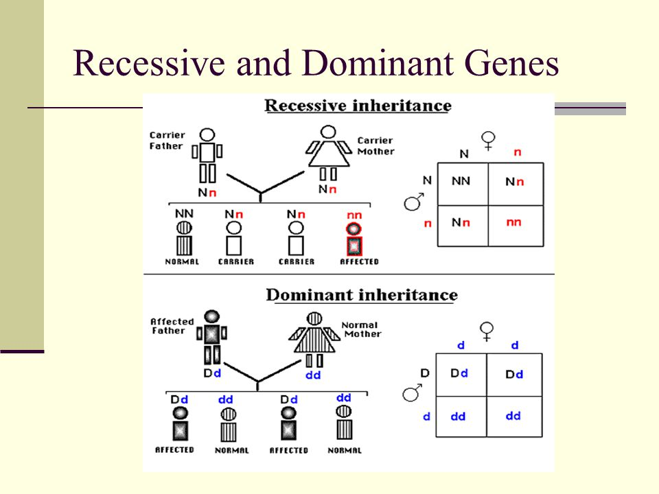 Chapter 2 Lecture Notes and Behavior Genetics - ppt video ...