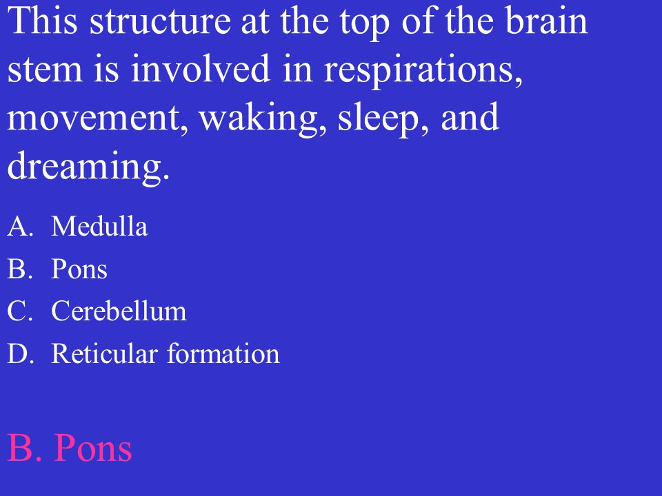 This structure at the top of the brain stem is involved in respirations, movement, waking, sleep, and dreaming.