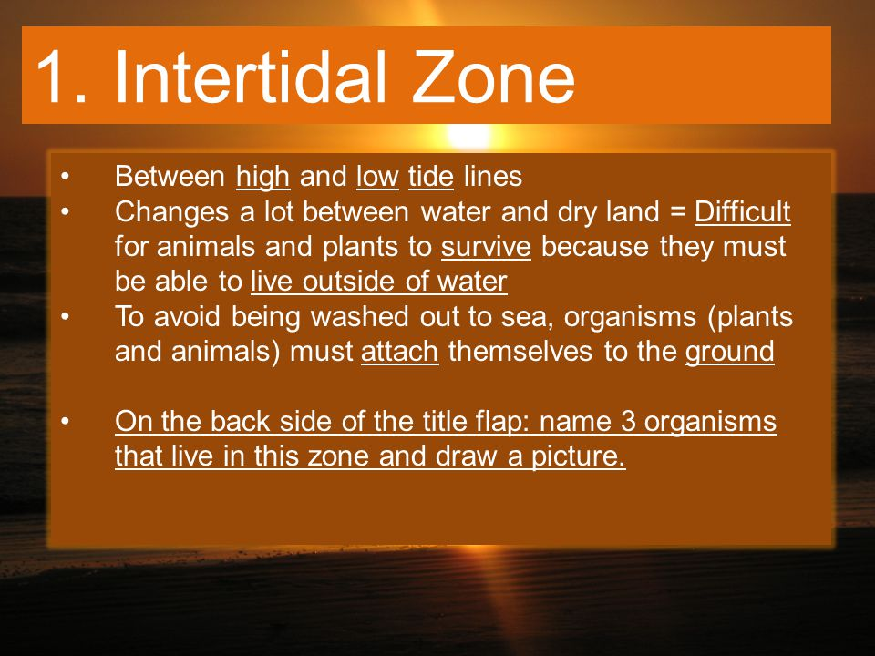 1. Intertidal Zone Between high and low tide lines