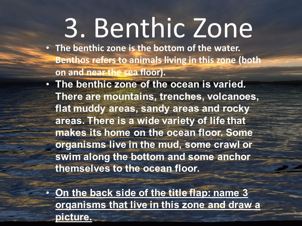 3. Benthic Zone The benthic zone is the bottom of the water. Benthos refers to animals living in this zone (both on and near the sea floor).