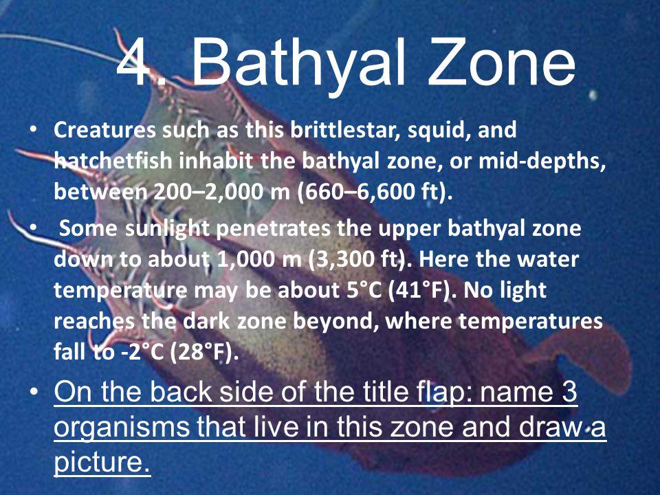 4. Bathyal Zone 4. Bathyal Zone