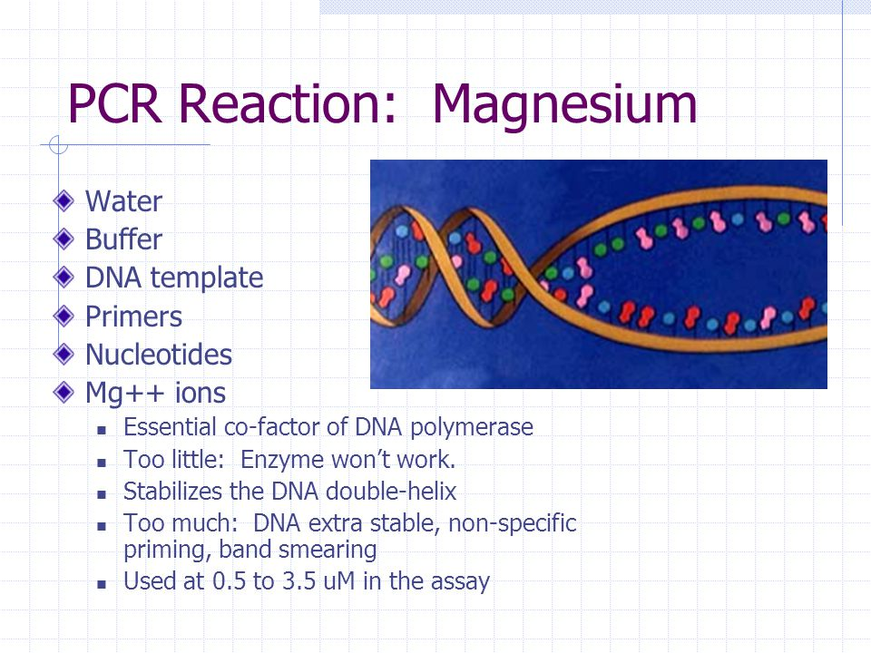 How pcr works cold spring harbor animation animated gif for How much template dna for pcr