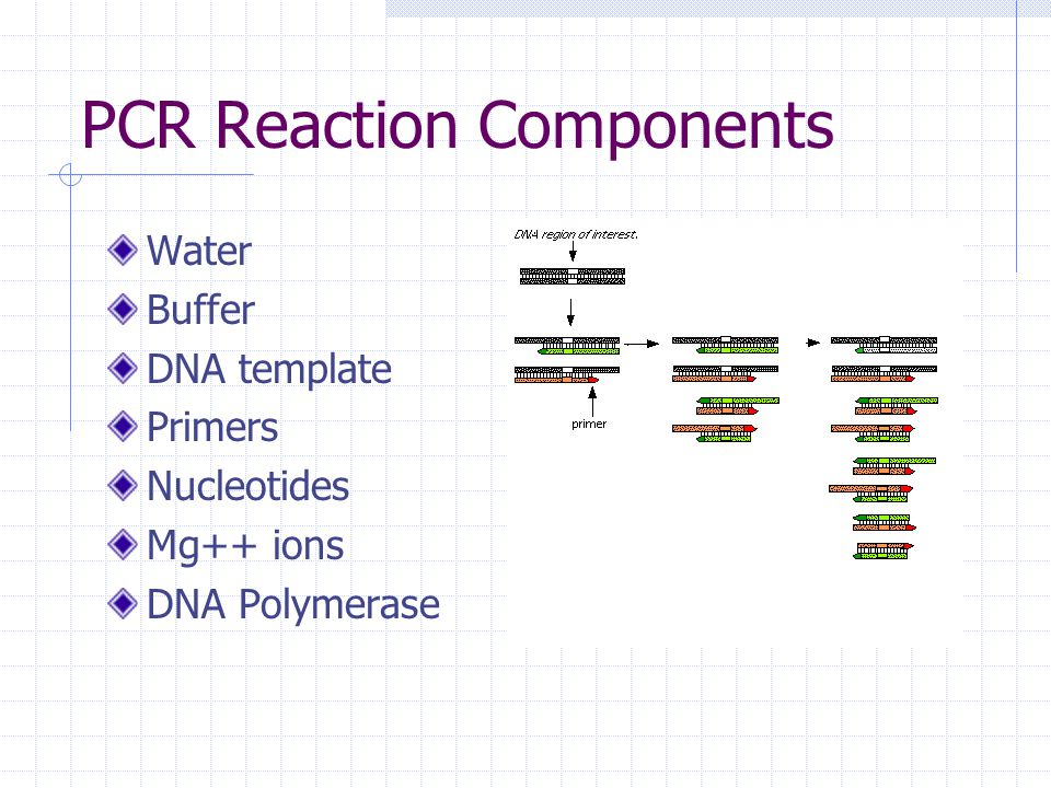 how much template dna for pcr - how pcr works cold spring harbor animation animated gif