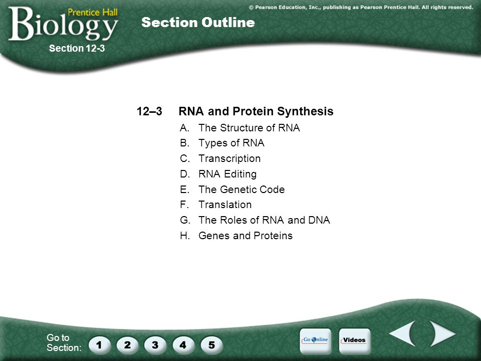 Section 12 3 Rna And Protein Synthesis Worksheet Answers : Interest Grabber Order Order  Ppt Download With  Section Outline  Rna And Protein Synthesis  From Slideplayer.com Photos