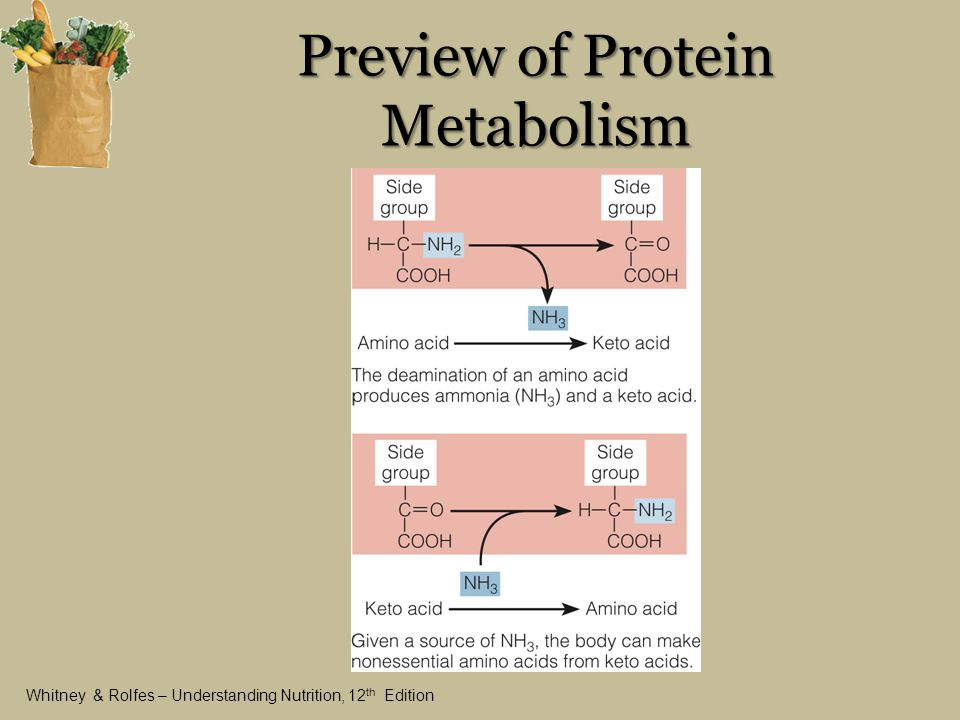 metabolism and high protein consumption One of the major functions of the kidney is the elimination of the products of protein metabolism it is not surprising, therefore, that protein intake exerts many diverse effects on the kidney most attention has been directed toward the role of protein intake in chronic renal failure for at least .
