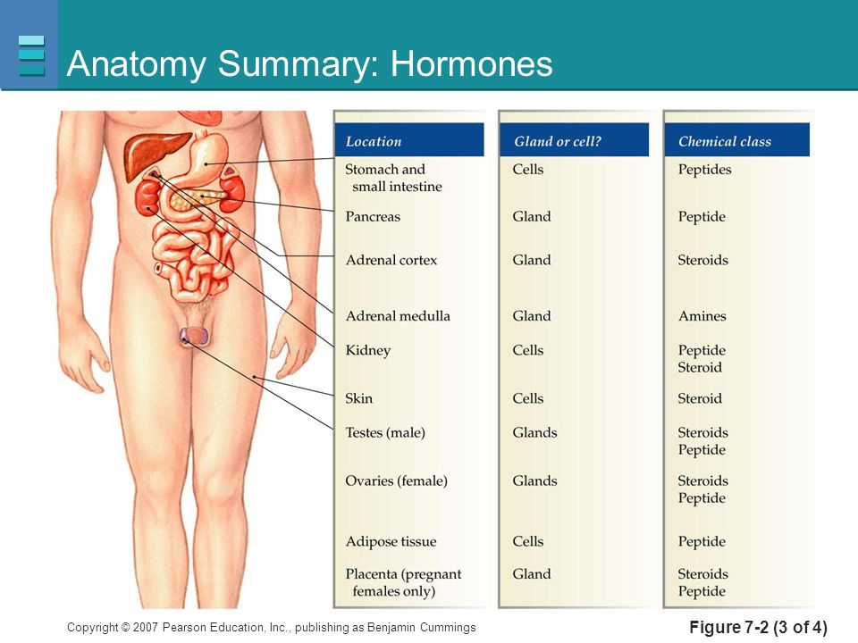 Endocrine System Function and purpose of hormones - ppt video online ...