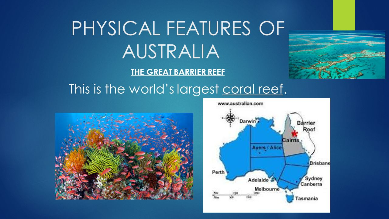 the main characteristics of coral reefs Coral reefs are home to thousands of different species of plants,fishes, and other types of animals, but the coral reef biome is dominated by just a few main groups these dominant groups include one type of unusual animals called the stony or scleractinian corals, and a type of marine algae called crustose coralline red algae.