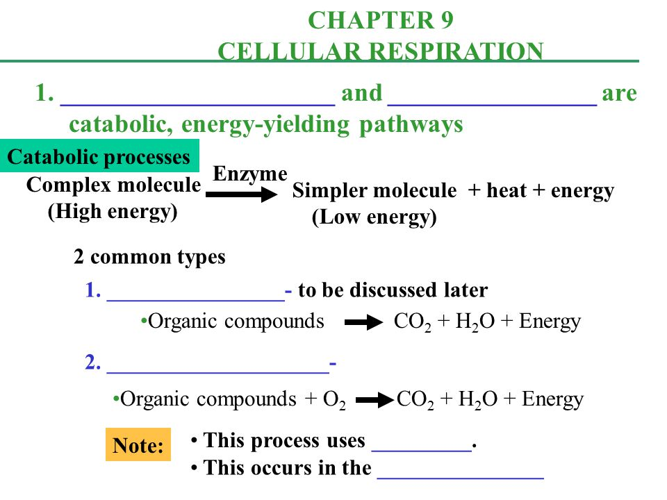 ap biology chapter 9 notes