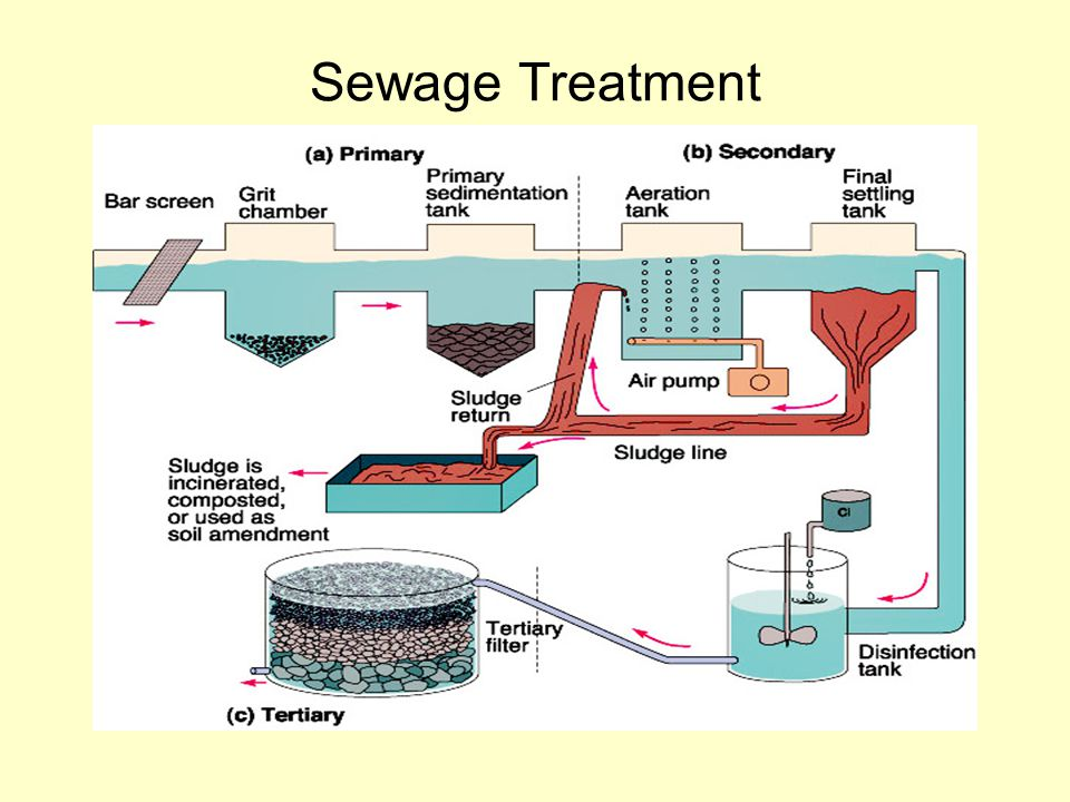 biomimicry sewage treatment and natural resources Easily share your publications and get them in front of issuu's millions natural resources com/resources/biomimicry+beyond+organisms.