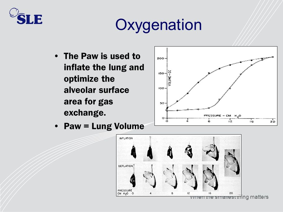 Oxygenation The Paw is used to inflate the lung and optimize the alveolar surface area for gas exchange.