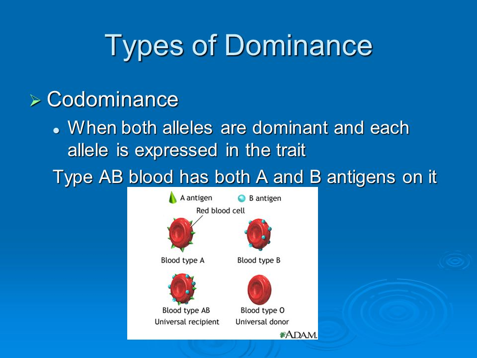 Types of Dominance Codominance
