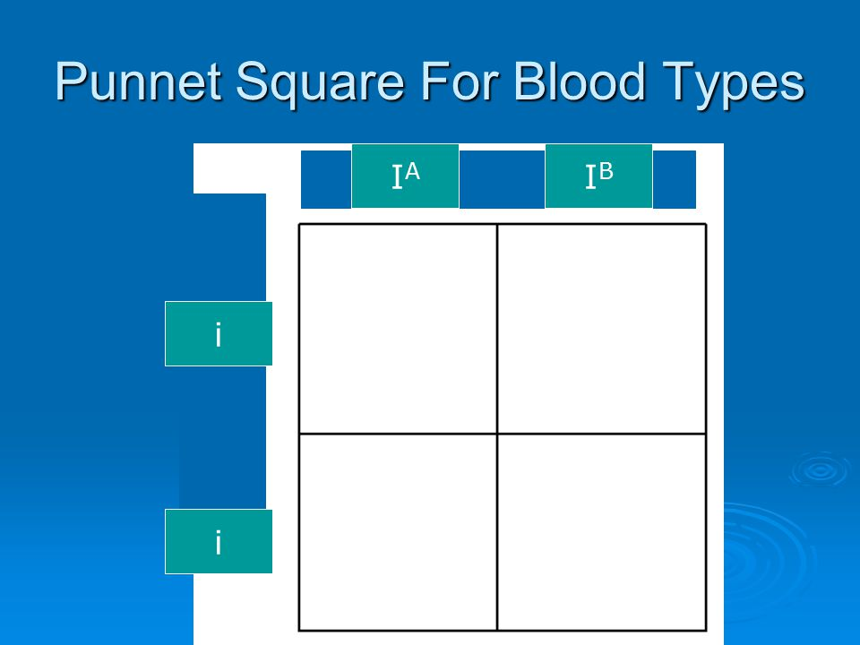 Punnet Square For Blood Types