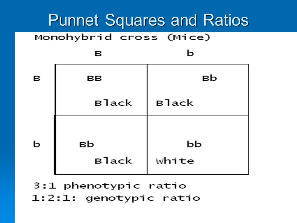 Punnet Squares and Ratios