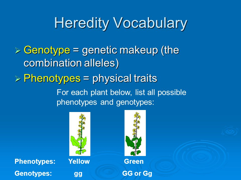 relationship between traits and heredity vocabulary