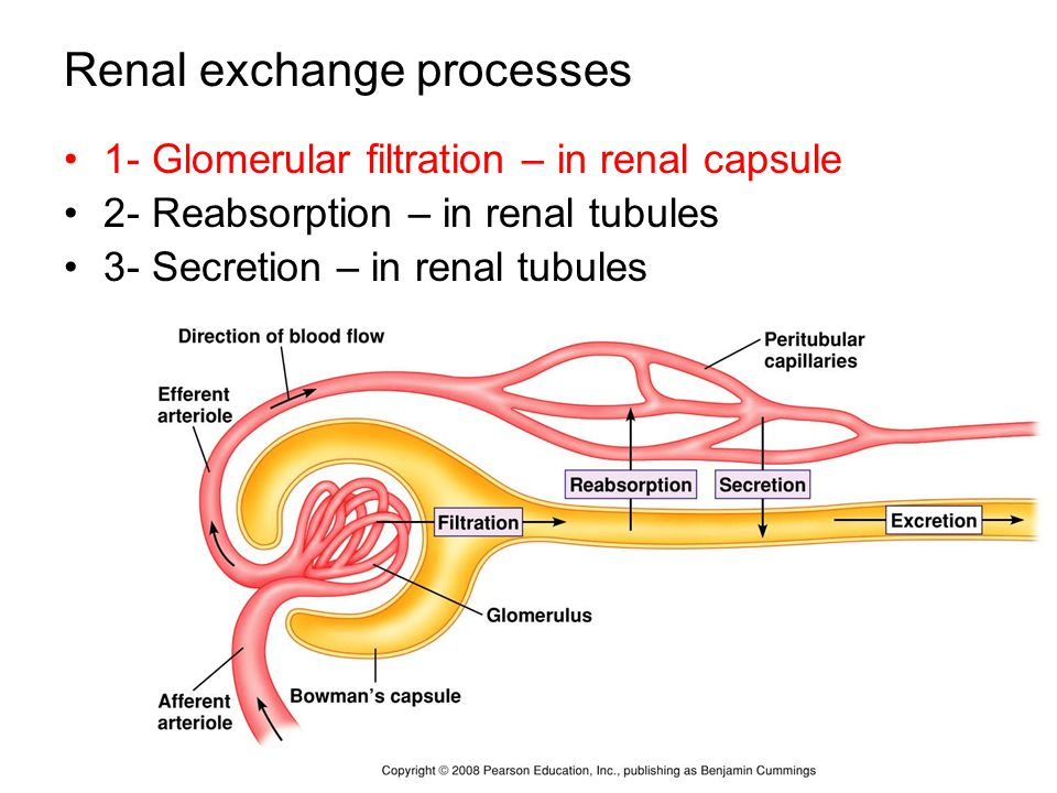 physioex 8 exercise 9 renal system physiology Trove: find and get australian resources books, images, historic newspapers, maps, archives and more.