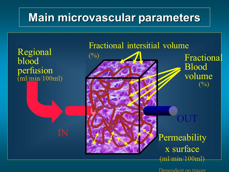 Main microvascular parameters