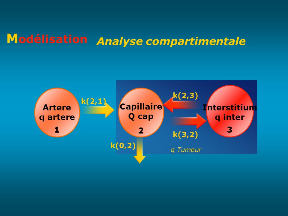 Modélisation Analyse compartimentale Interstitium q inter 3 Artere