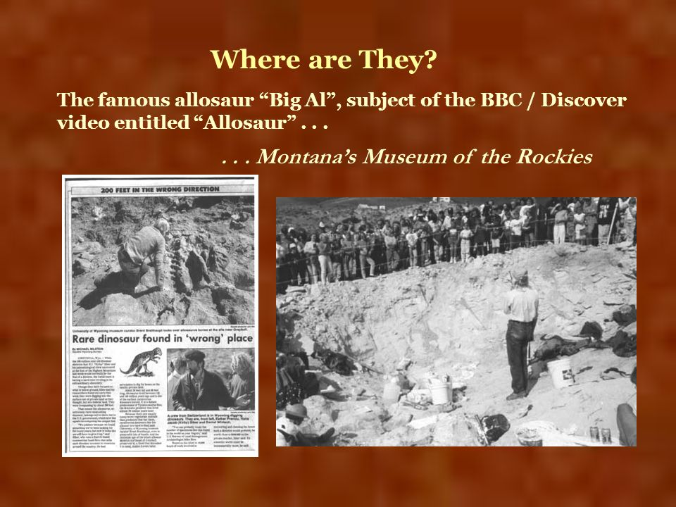 Where are They . . . Montana's Museum of the Rockies