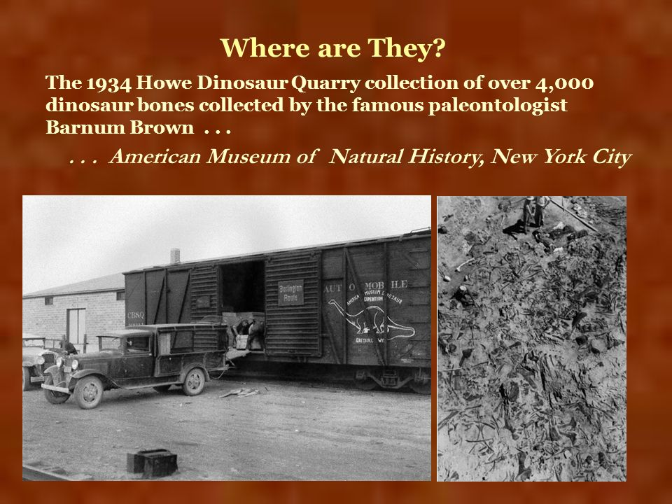 Where are They The 1934 Howe Dinosaur Quarry collection of over 4,000 dinosaur bones collected by the famous paleontologist Barnum Brown . . .