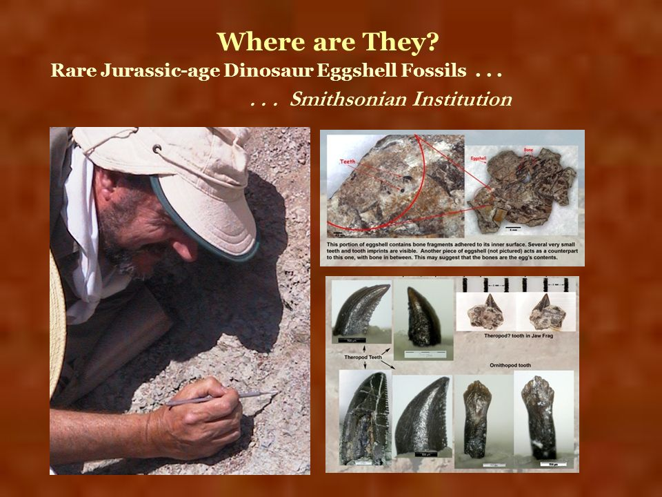 Where are They . . . Smithsonian Institution