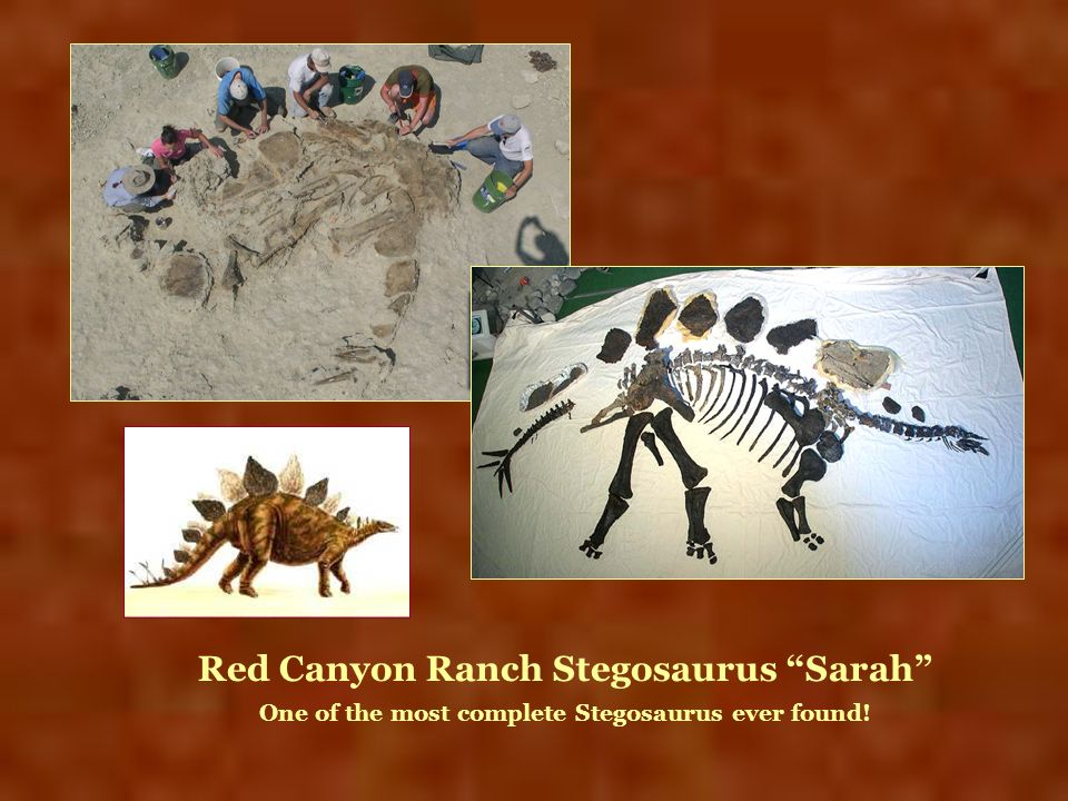 Red Canyon Ranch Stegosaurus Sarah