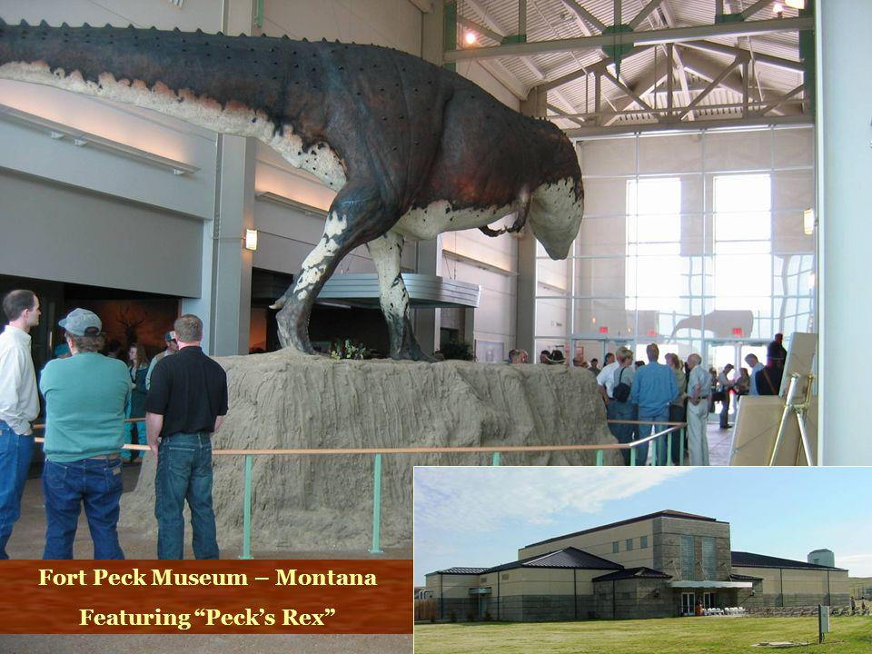 Fort Peck Museum – Montana Featuring Peck's Rex