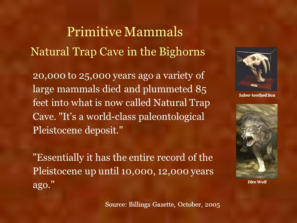 Primitive Mammals Natural Trap Cave in the Bighorns