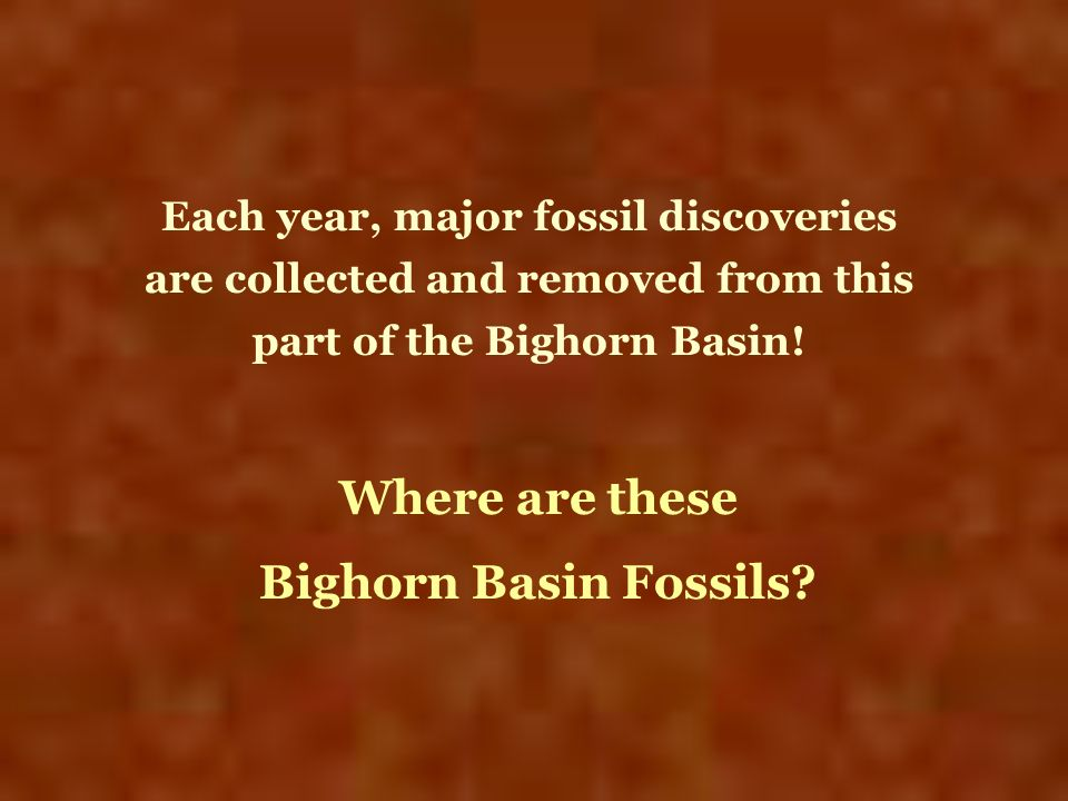 Where are these Bighorn Basin Fossils