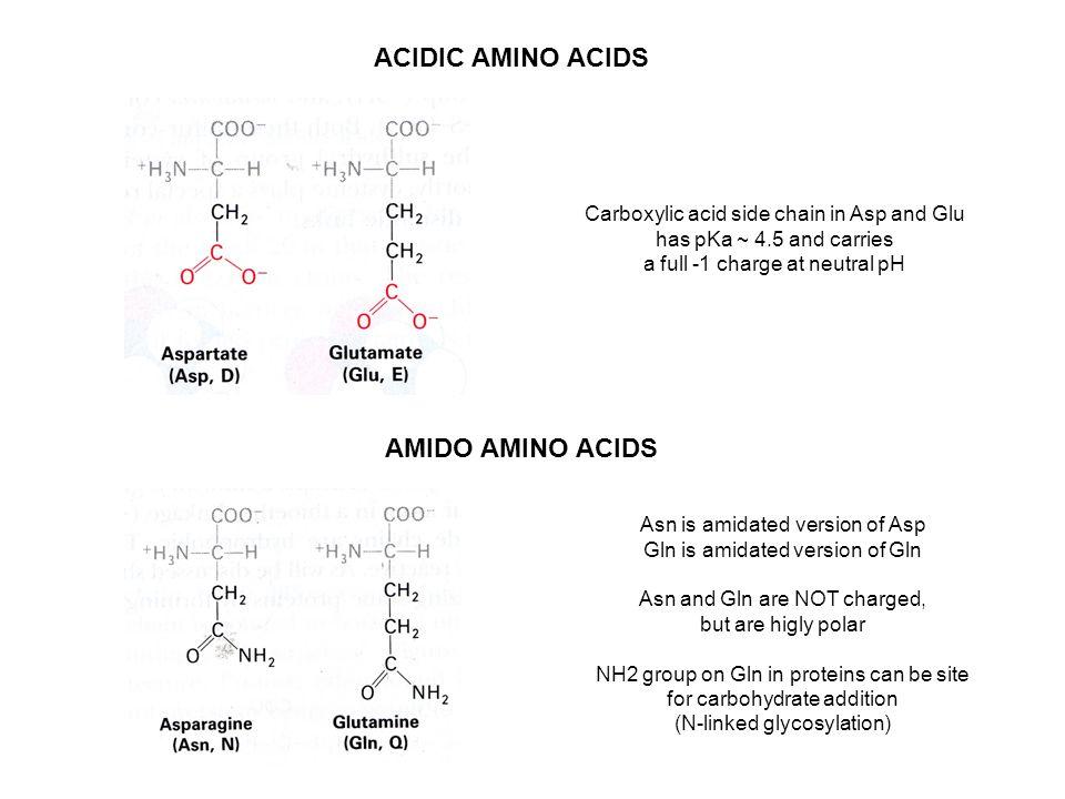 Gln Amino Acid Charge