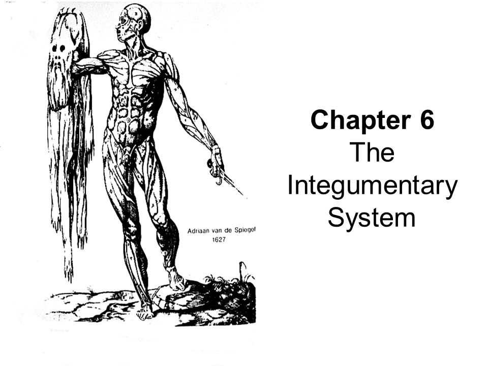 chapter 6 integumentary system Mosby items and derived items © 2010, 2006, 2002, 1997, 1992 by mosby, inc, an affiliate of elsevier inc chapter 6 the integumentary system and body.