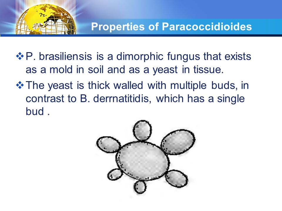 Properties of Paracoccidioides