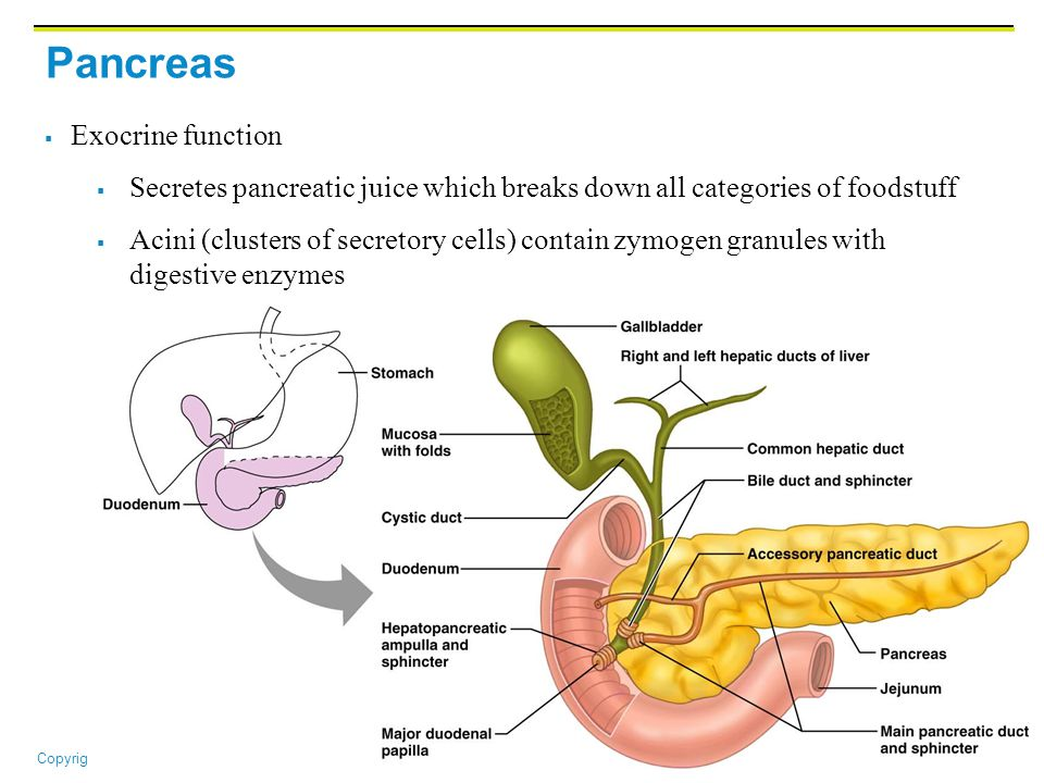 pancreas diagram functions - 960×720
