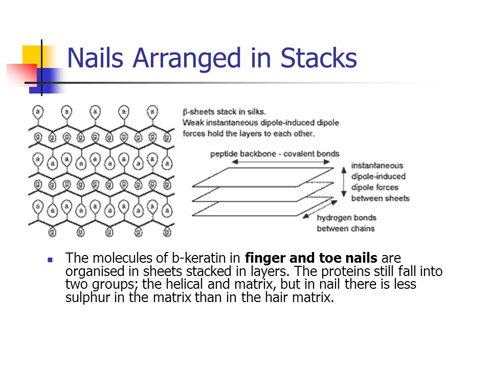 Biology of Hair and Nails - ppt video online download