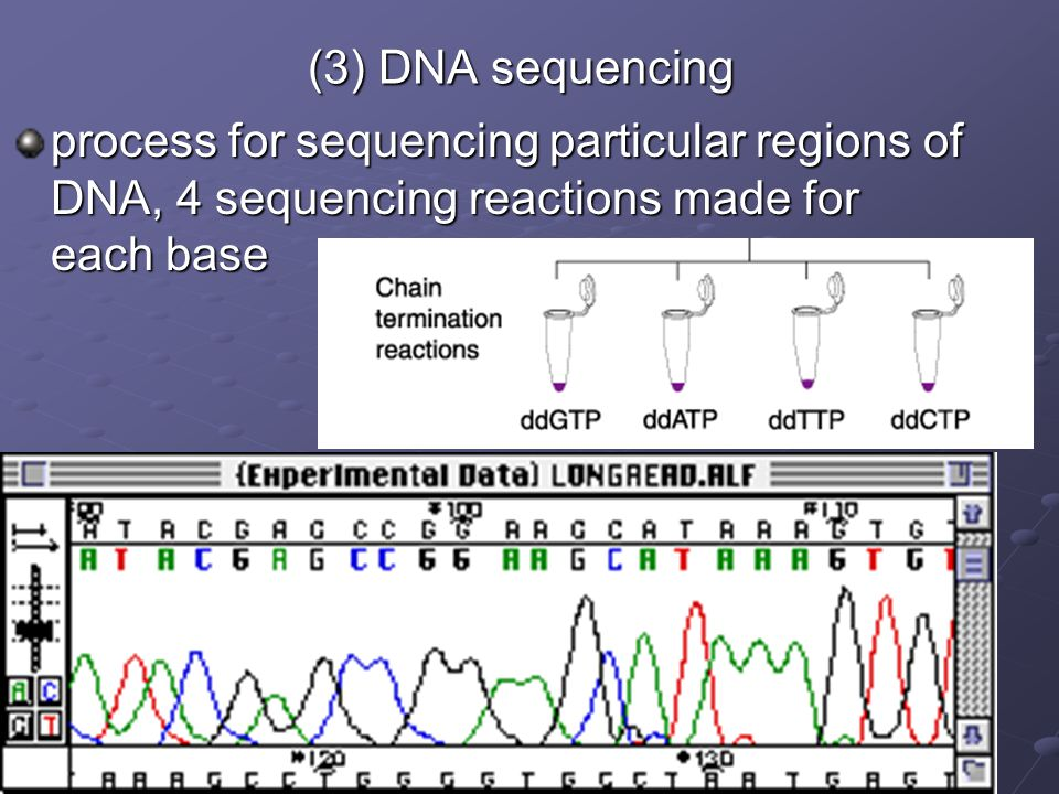 (3) DNA sequencing process for sequencing particular regions of DNA, 4 sequencing reactions made for each base.