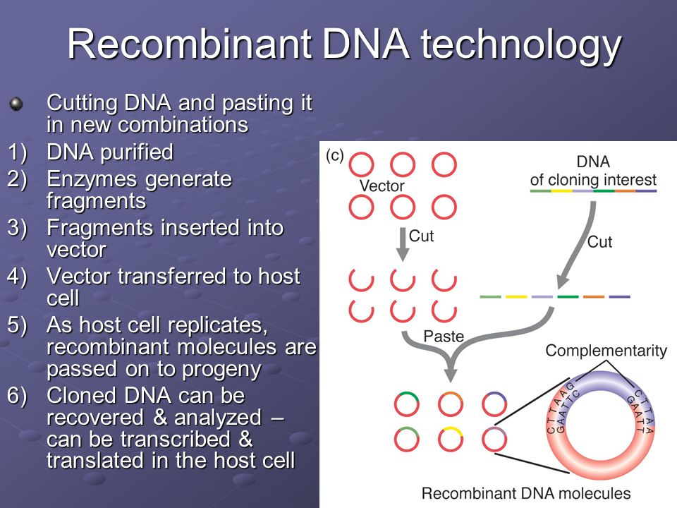 an analysis of using recombinant dna technology to make human haemoglobin