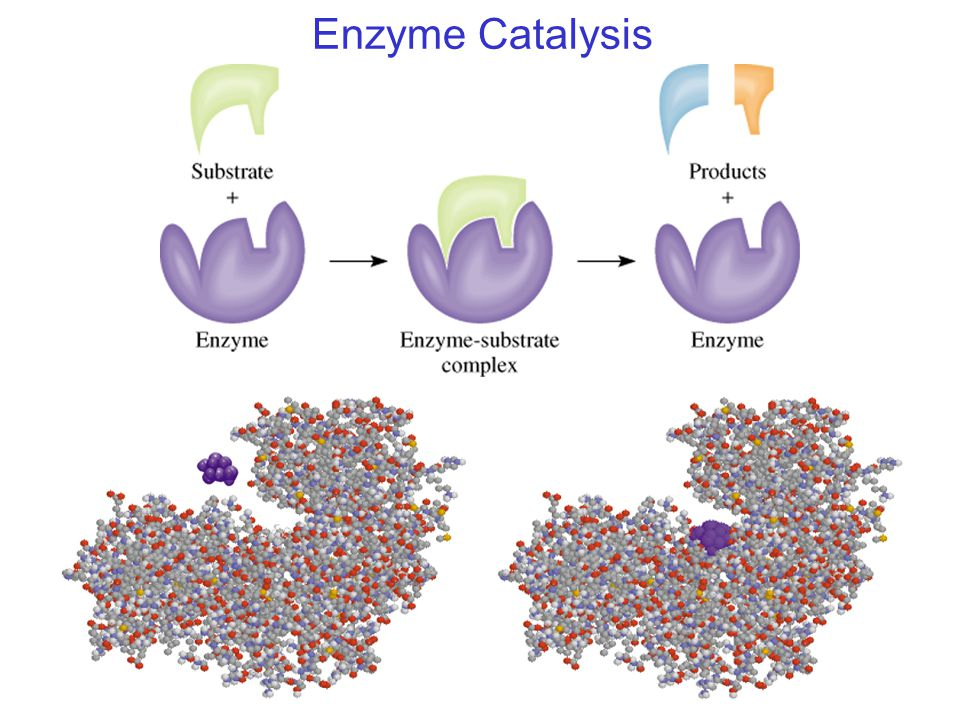 enzyme catalysis 1 introduction to catalysis catalysis in industry catalysts are the workhorses of chemical transformations in the industry  enzymes are nature's catalysts for.