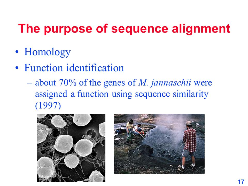 The purpose of sequence alignment