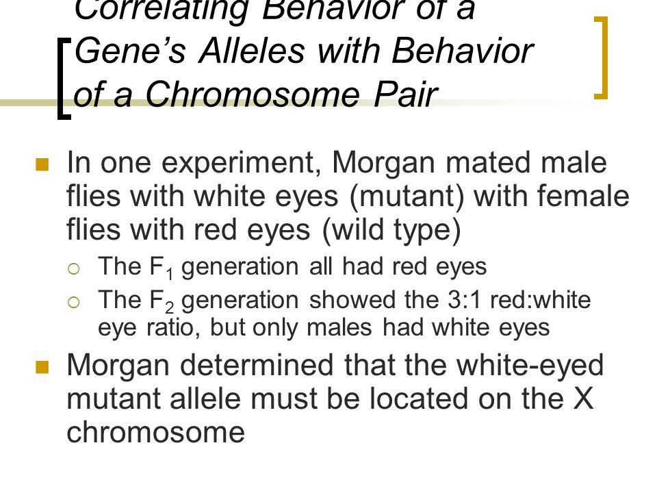 Correlating Behavior of a Gene's Alleles with Behavior of a Chromosome Pair