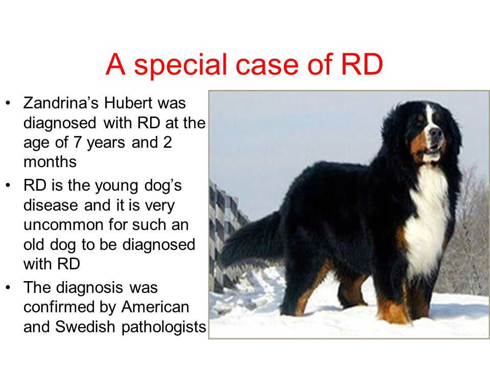 A special case of RD Zandrina's Hubert was diagnosed with RD at the age of 7 years and 2 months.