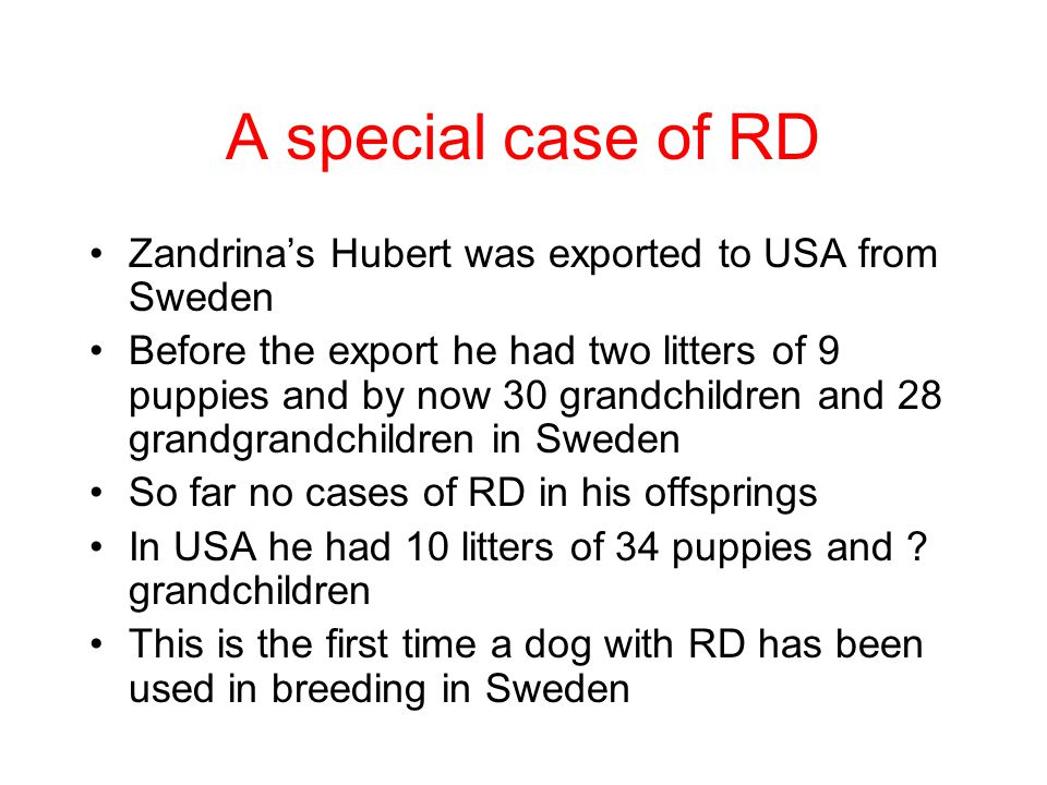 A special case of RD Zandrina's Hubert was exported to USA from Sweden
