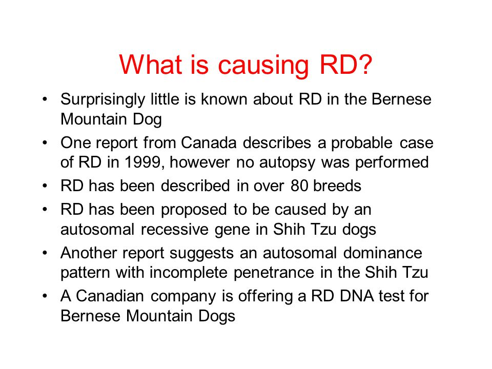 What is causing RD Surprisingly little is known about RD in the Bernese Mountain Dog.