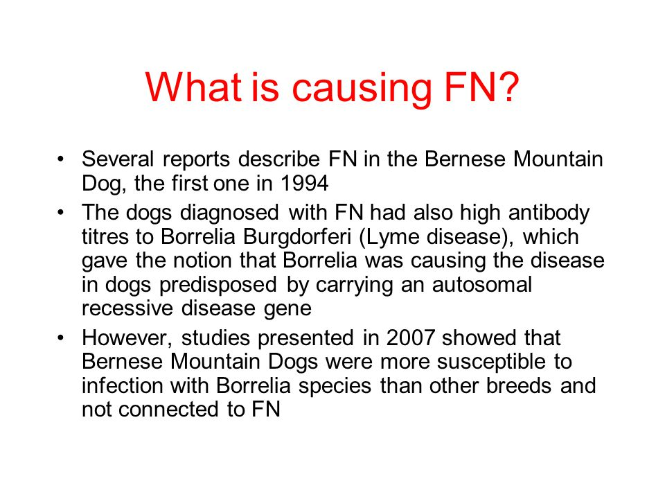 What is causing FN Several reports describe FN in the Bernese Mountain Dog, the first one in