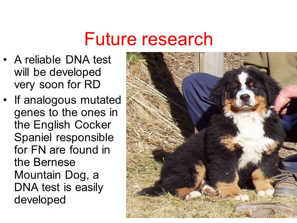 Future research A reliable DNA test will be developed very soon for RD