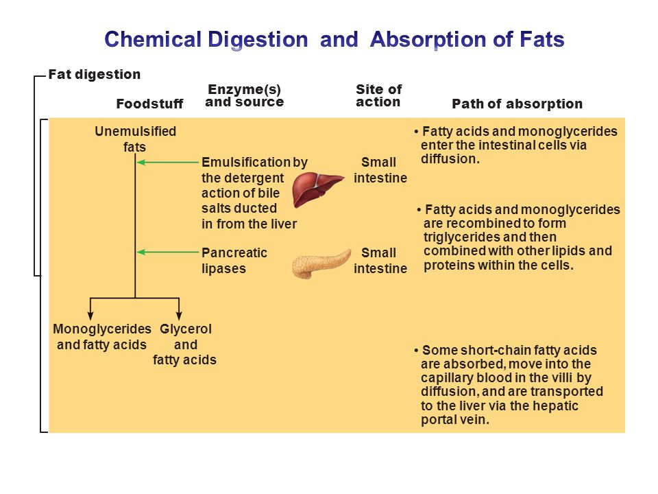 digestion and absorption of fats Lipids within the digestive system will tend to hydrophobically aggregate to   hydrolytic enzymes called lipases then digest the fats into their component parts.
