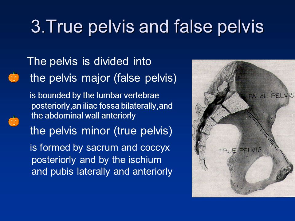 Anatomy of Female reproductive system - ppt video online ...