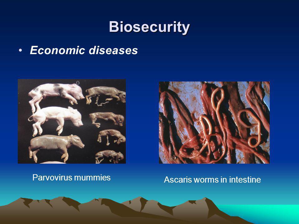 Biosecurity Economic diseases Parvovirus mummies