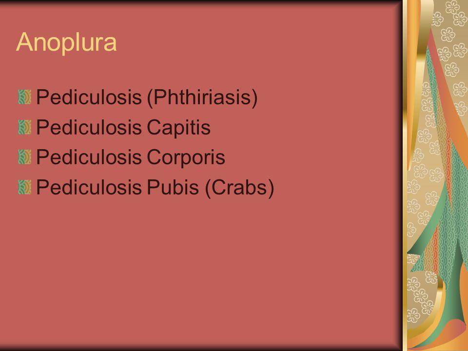 behandlung phthiriasis permethrin