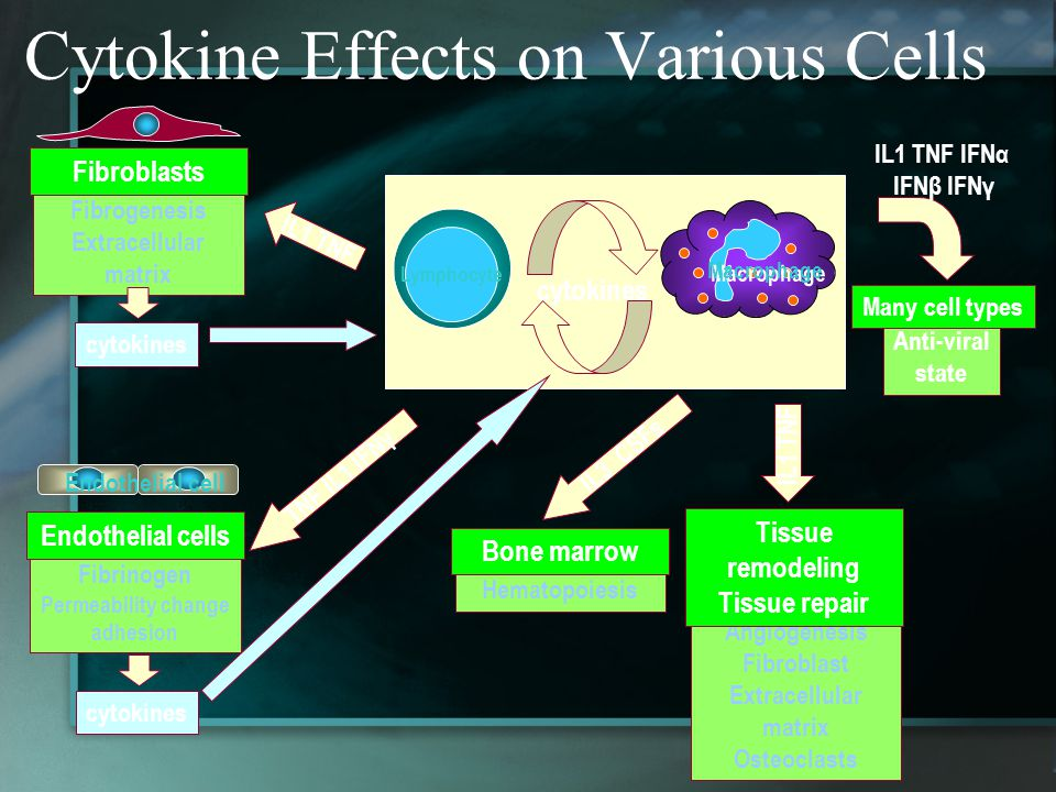 Cytokine Effects on Various Cells